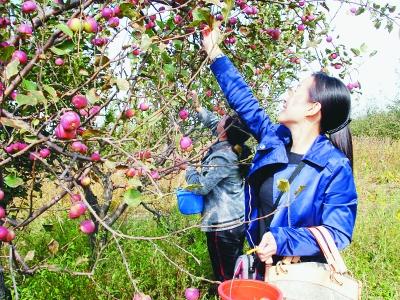 葡萄采摘手绘图片欣赏