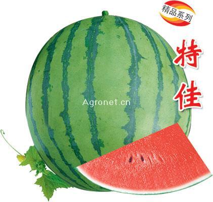 特佳 有籽西瓜种子