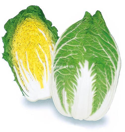 大量供应春季大白菜.白箩卜.西葫芦.菜花.甘蓝,豆角等四季新鲜蔬菜