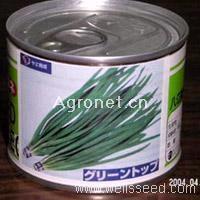 顶绿韭菜—韭菜种子
