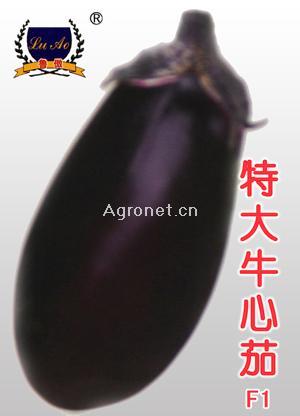 特大牛心茄-茄子種子