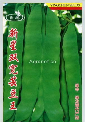 新星双宽芸豆王—菜豆种子
