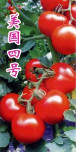 美國四號—番茄種子