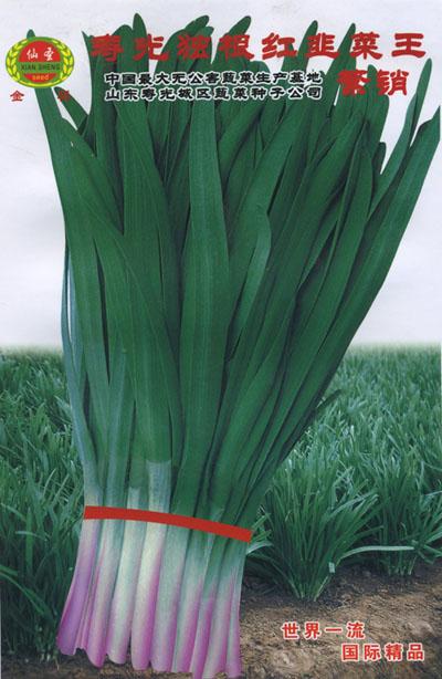 独根红韭菜王—韭菜种子