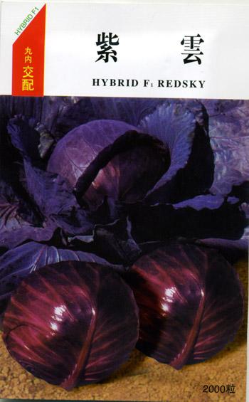 紫云甘藍種子