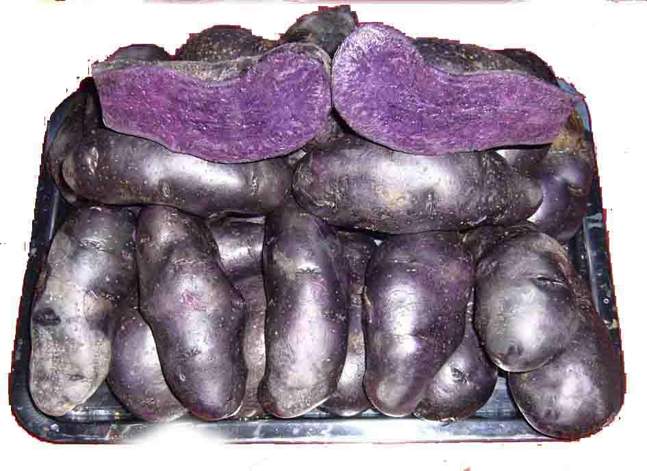 馬鈴薯種子——黑美人土豆
