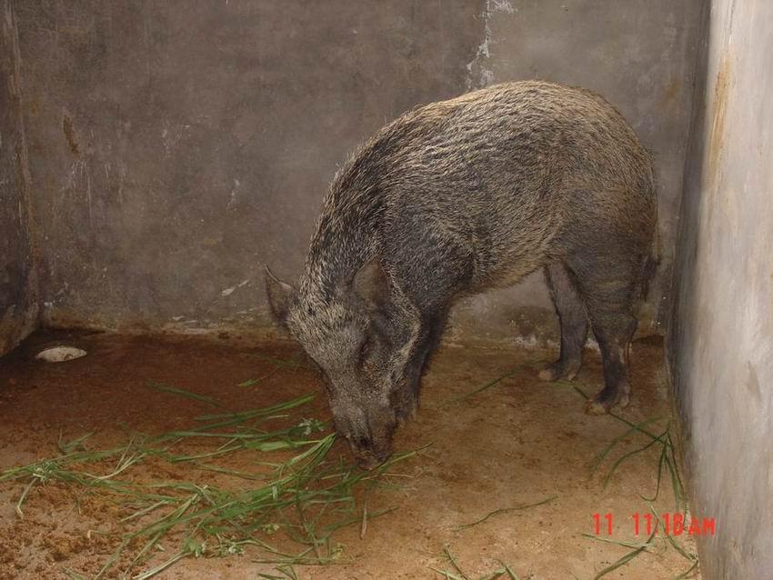梅州市金鹏特种动物养殖