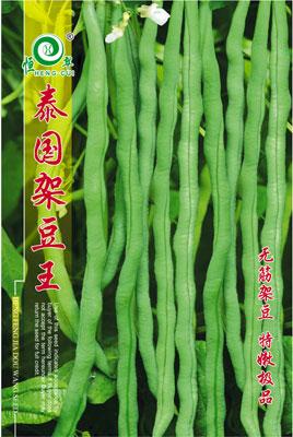 泰國架豆王——架豆種子