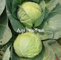 1818kc种子图片