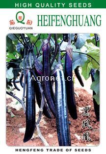 黑凤凰F1长茄——茄子种子