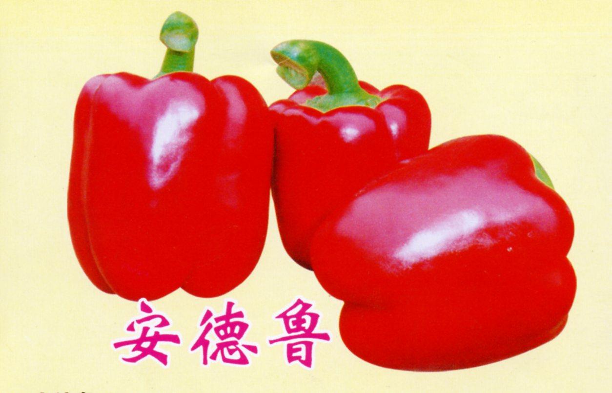 進口甜辣椒種子,番茄種子