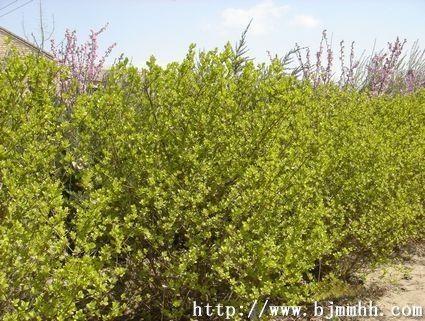 北京华源发苗木花卉交易市场