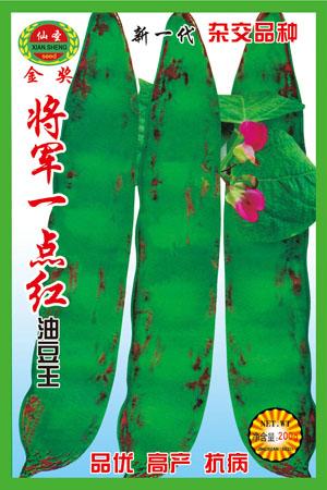 將軍一點紅油豆王—豆種種子