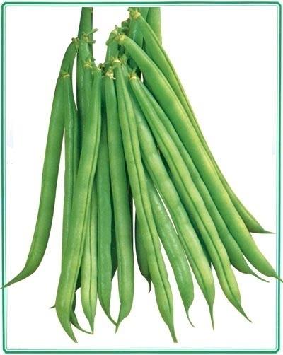 供应辣椒,甜瓜,豆角等特色蔬菜