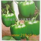 大量(红,绿)甜椒